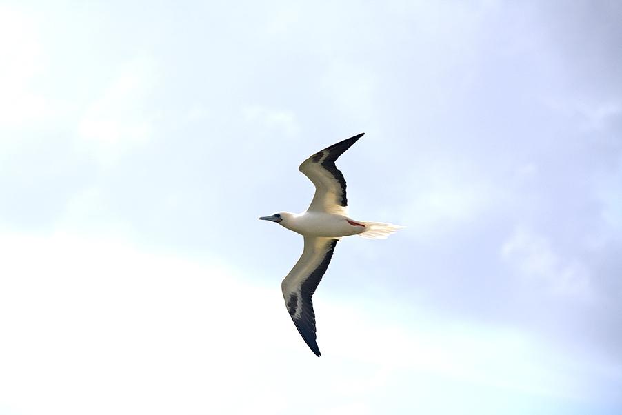 海鳥たちのパラダイス