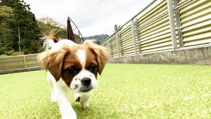 シェルターを拡張し、保護犬たちが幸せに、より快適に過ごせるように。